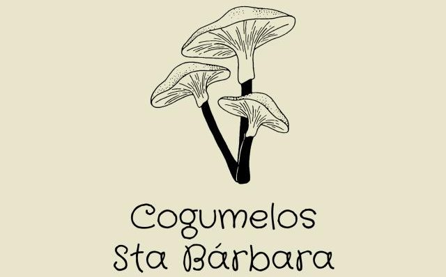 Cogumelos Santa Bárbara